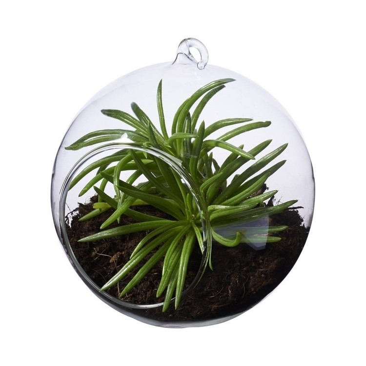 Terrarium Sphere - Outil de jardinage à prix de gros